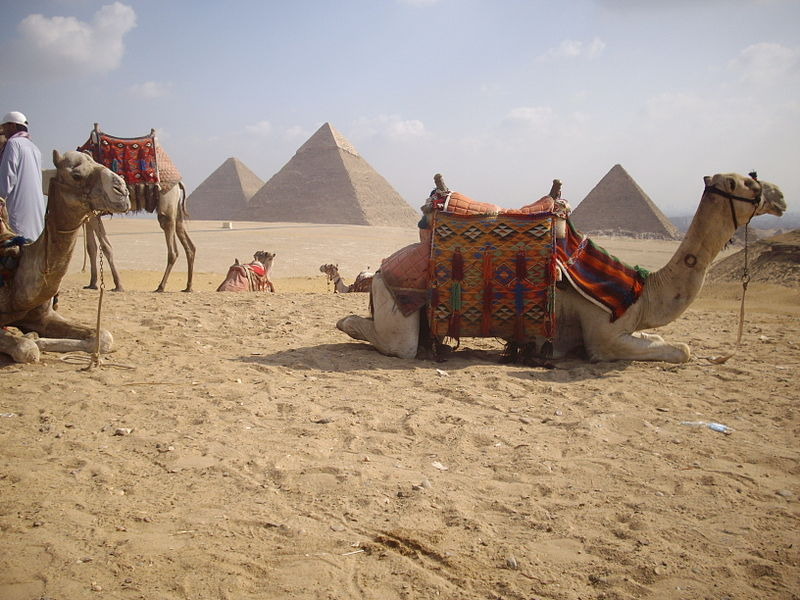 Camels and the Pyramids in Egypt