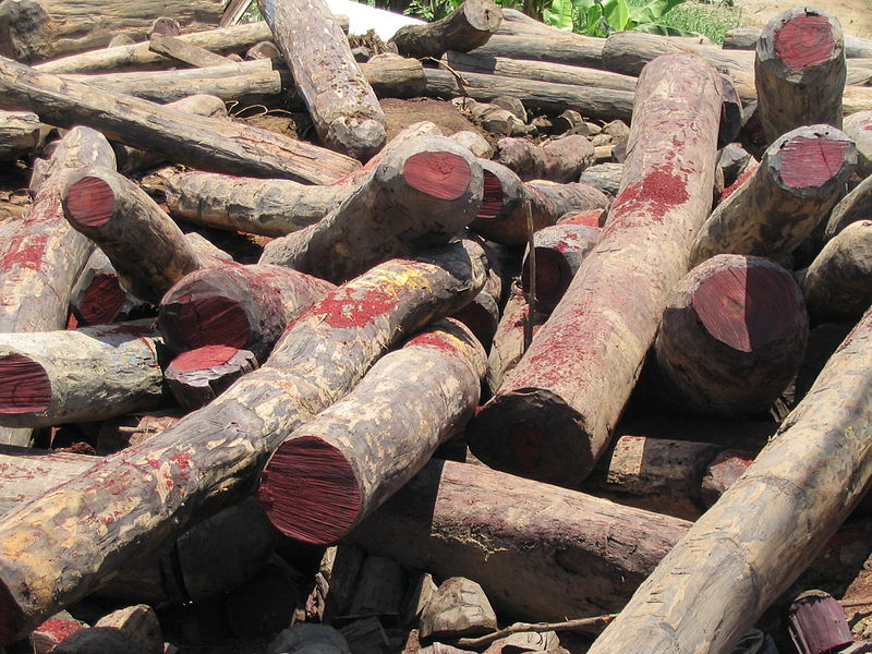 More illegally harvested Siamese Rosewood logs seized