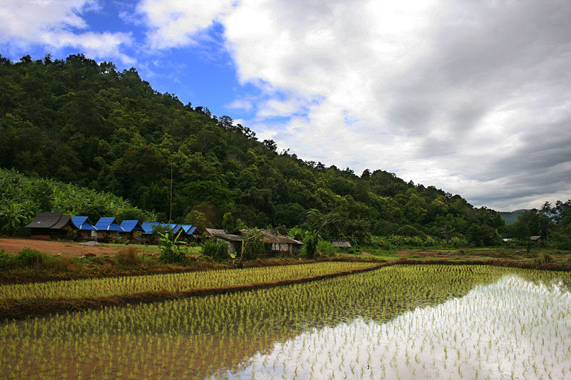 20 million THB in death benefits for those dying from chemicals in packaged rice