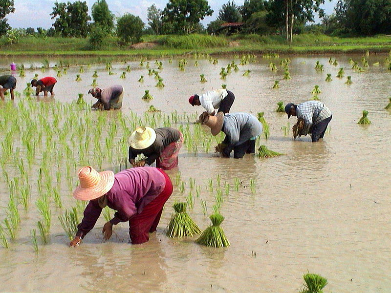 Thai government ready to pay farmers within one week