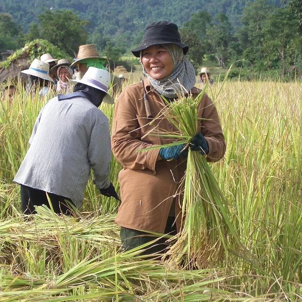 PM visits Nakhon Ratchasima rice farmers