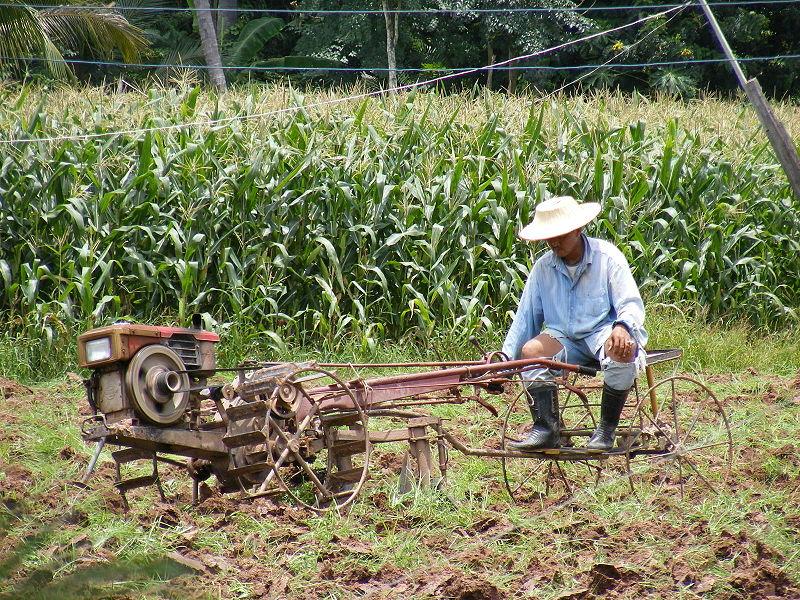 Farmer in Ban Pa Kanun