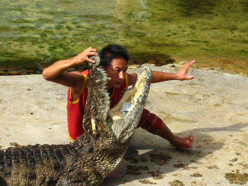Bangkok resident attacked by crocodile
