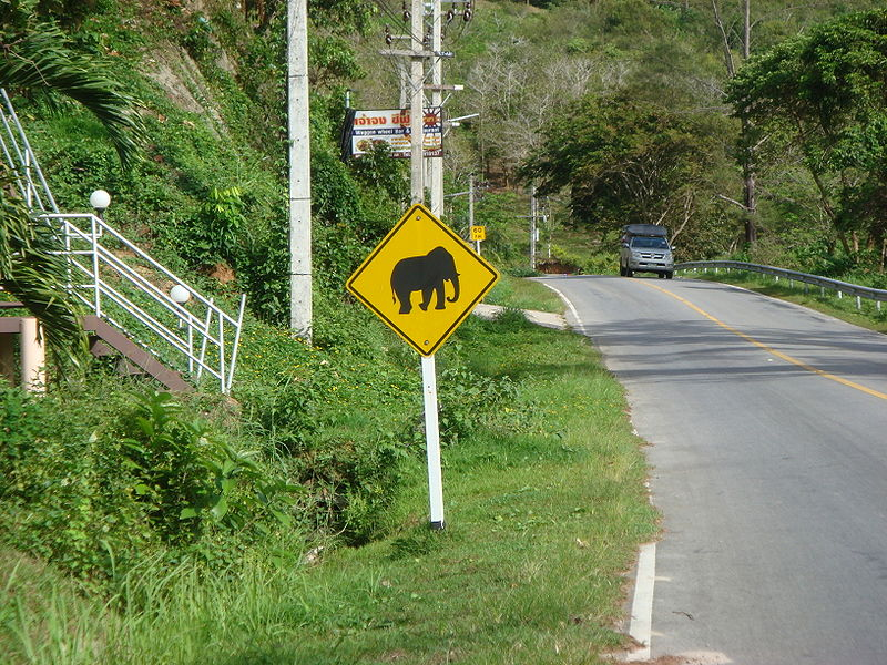 Elephant warning traffic sign in Phuket