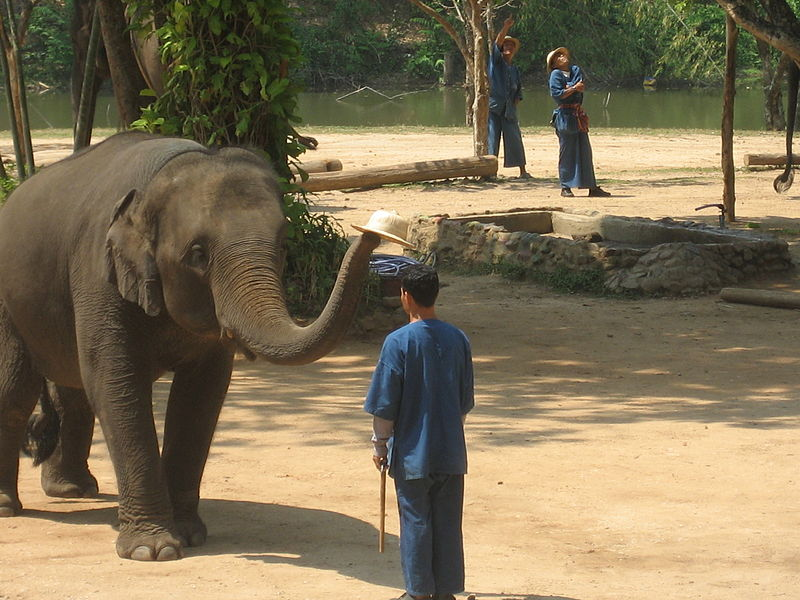 Elephant and mahout in Lampang