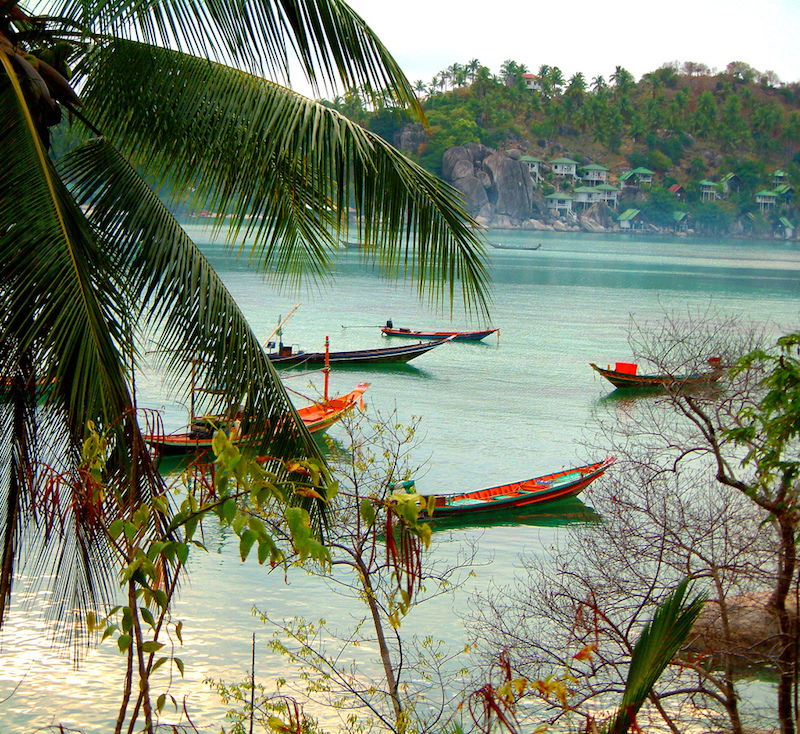 Forest and beach in Koh Tao