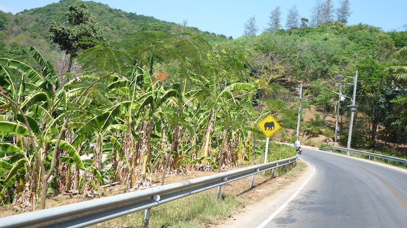 Elephant warning sign sign on Rawai-Kata road in Phuket Island